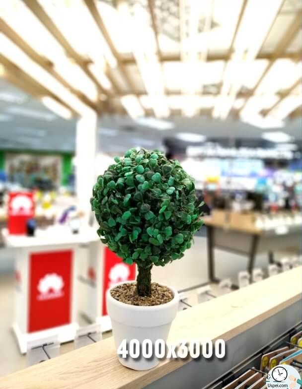 Xiaomi Mi 8 Lite - пример фото основной камеры