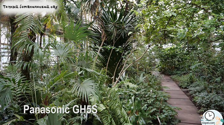 iPhone X vs Panasonic GH5S Темная оранжерея ботанического сада