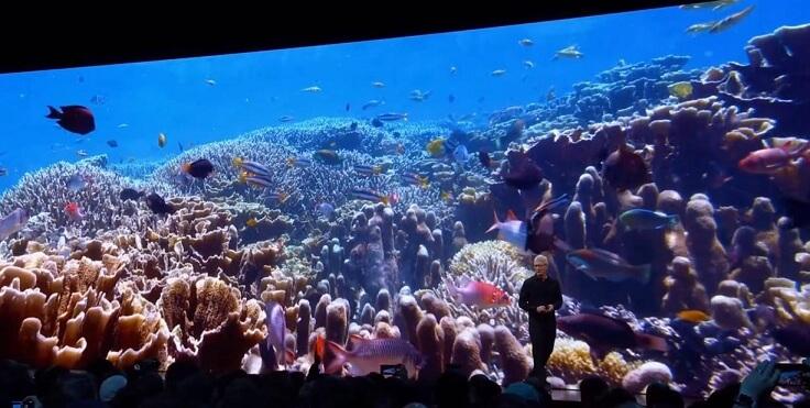 Подводный мир, снятый в 4к HDR С TV OS