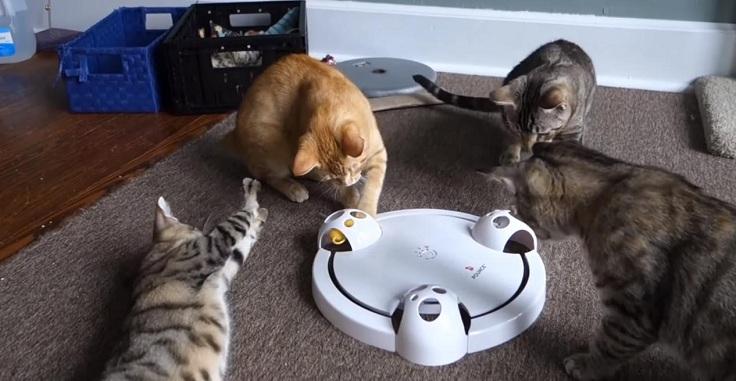 Интерактивная дразнилка для кошек