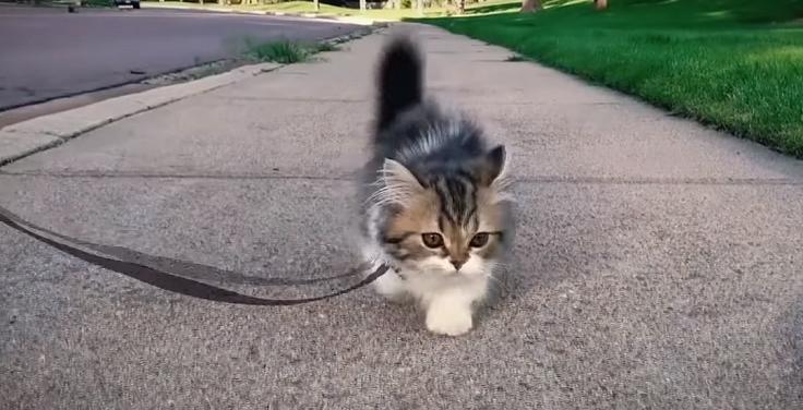Поводок для котиков
