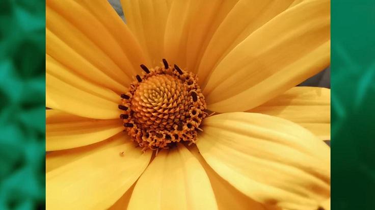 Дистанция фокусировки 4 см позволяет на карачках ползать вокруг жучков, цветочков