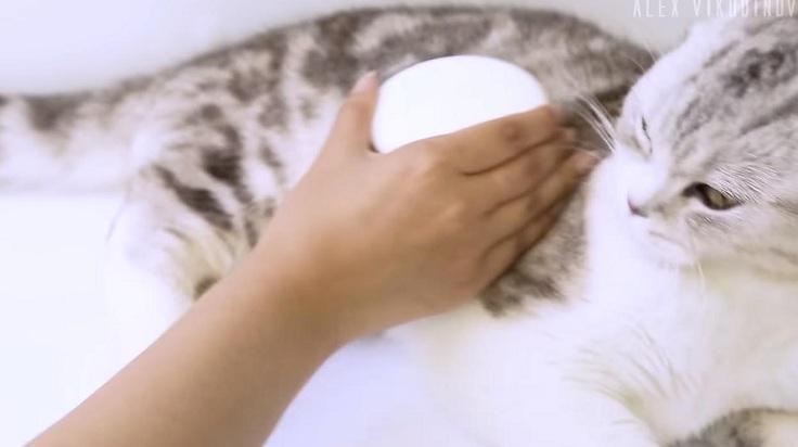 Массажная расческа для котейки
